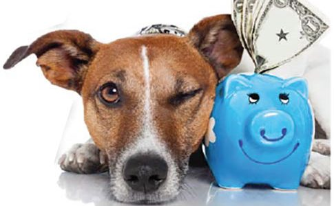 Funding Your Pet's Medical Bills: From Piggy Bank to Doggy Bank