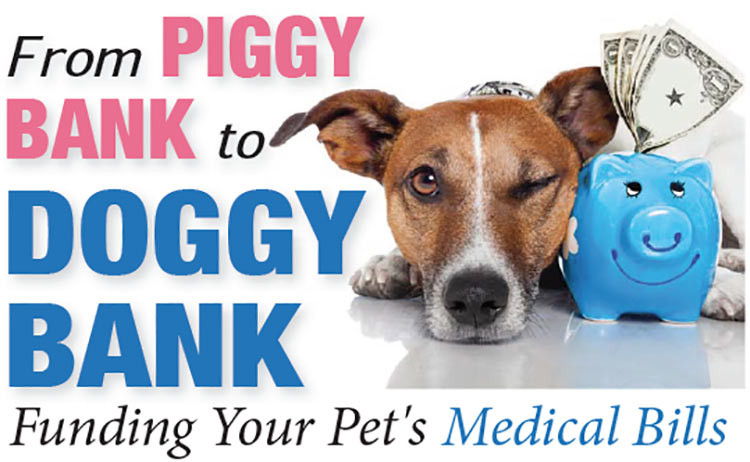 Funding Your Pet's Medical Bills