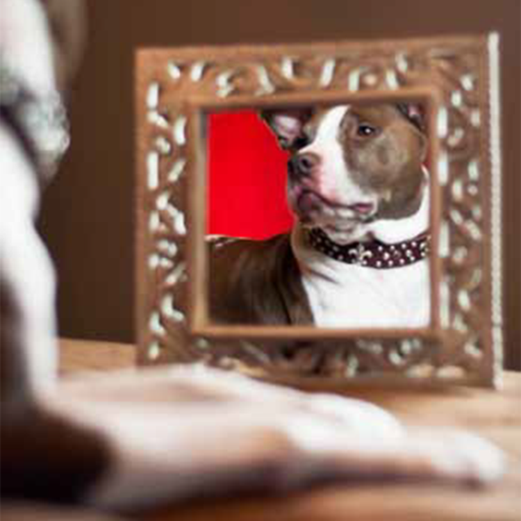 Professional Dog Photography Mt. Pleasant, SC Pets
