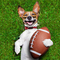 Fierce and Furry The 2018 Puppy Bowl