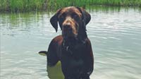 MT PLEASANT FAVORITE PET: Bubba the Labrador retriever