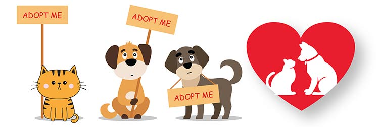Rescue or Adopt a Pet