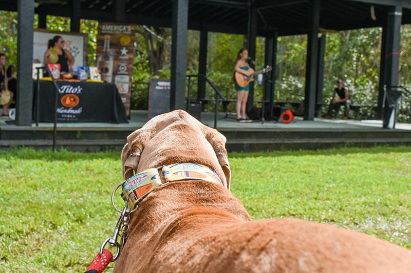 Lowcountry Dog Magazine's Fourth Annual Dog Adoption Event. Photo credit Stono Tides Photography.