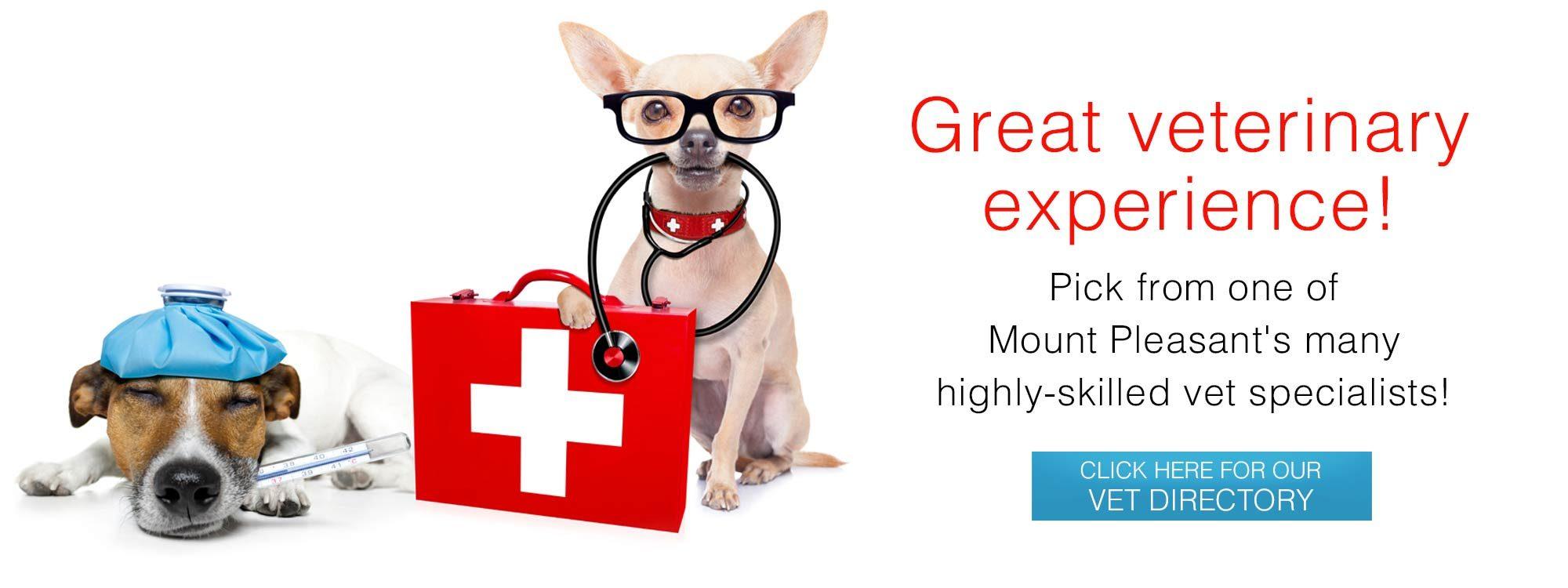 Veterinary Specialist Directory slide