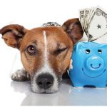 Funding Your Pet's Medical Bills (featured image)
