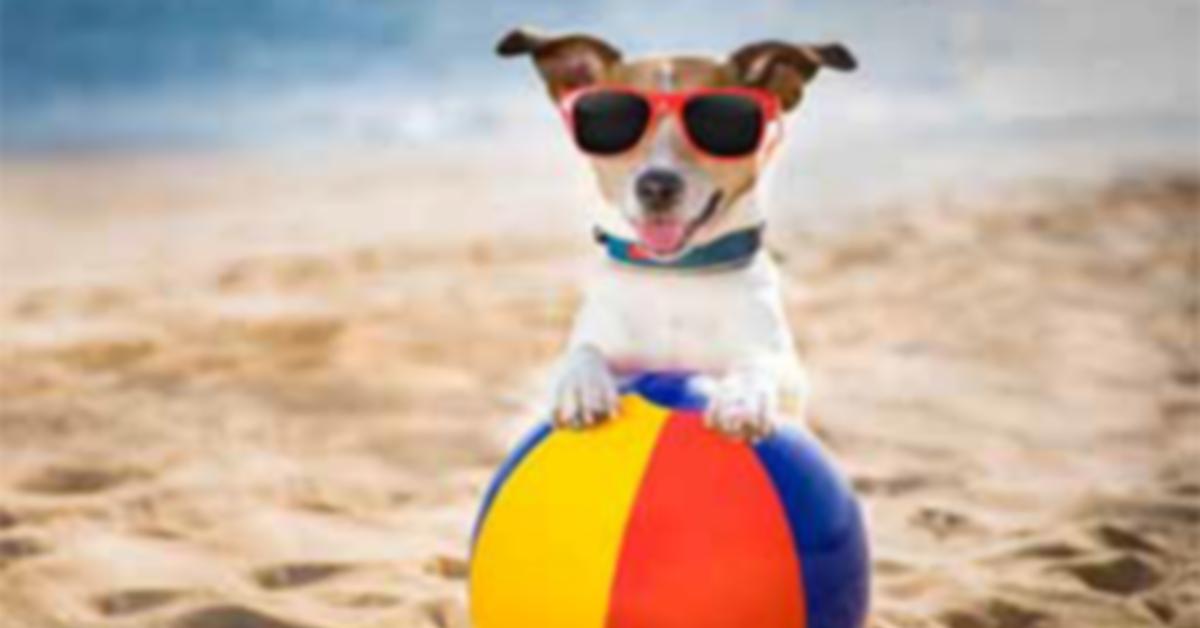 Pups on Sullivan's Island, South Carolina Laws Rules