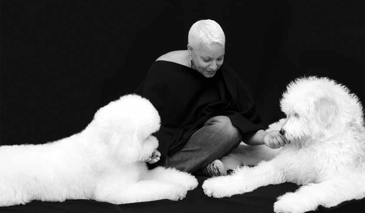 Senior love dogs goldendoodle