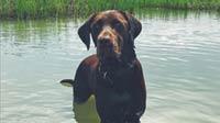 MT PLEASANT FAVORITE PET: Bubba the Labrador retriever