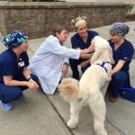 Medical staff getting their fix from a pet therapy dog