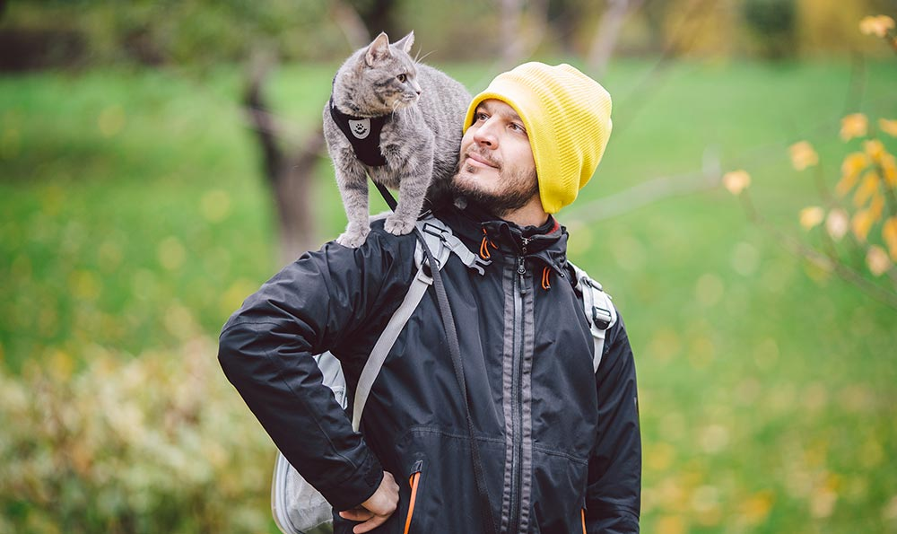A cat standing on his person's shoulder.