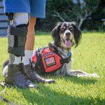 John Beahm with his PTSD service dog, Sadie.